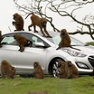 Hyundai-i30-Monkeys-8[2]